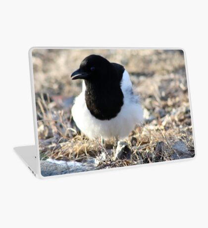 Black-billed Magpie Laptop Skin