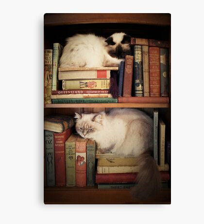 Library Cats Canvas Print