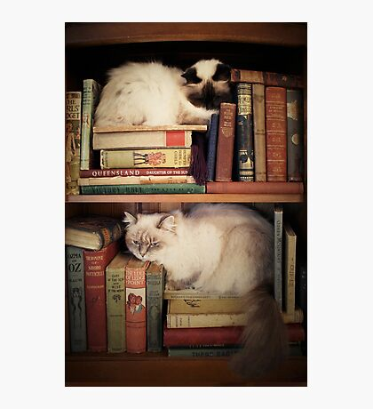 Library Cats Photographic Print