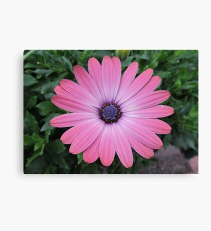 May I Admire You Again Today? Canvas Print