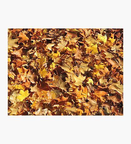 Autumn's Gold Photographic Print