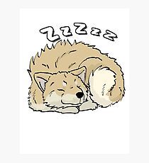 Sleeping Lappie (Light Brown with Markings) Photographic Print