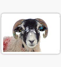 Swaledale Sheep in Winter Snow Sticker