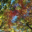 Canopy colour - 2013 by Joseph Rotindo