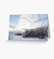 Ice Storm Aftermath -  Greeting Card