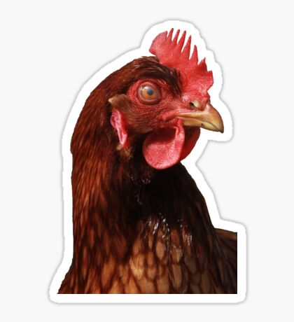 Chicken You Out Sticker