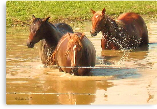 """Horses with Attitude no. 5, 'Hey, Youse Guys, I'm Still Talkin'""... prints and products        by Bob Hall©"