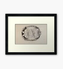 Tortoises terrapins and turtles drawn from life by James de Carle Sowerby and Edward Lear 018 Framed Print