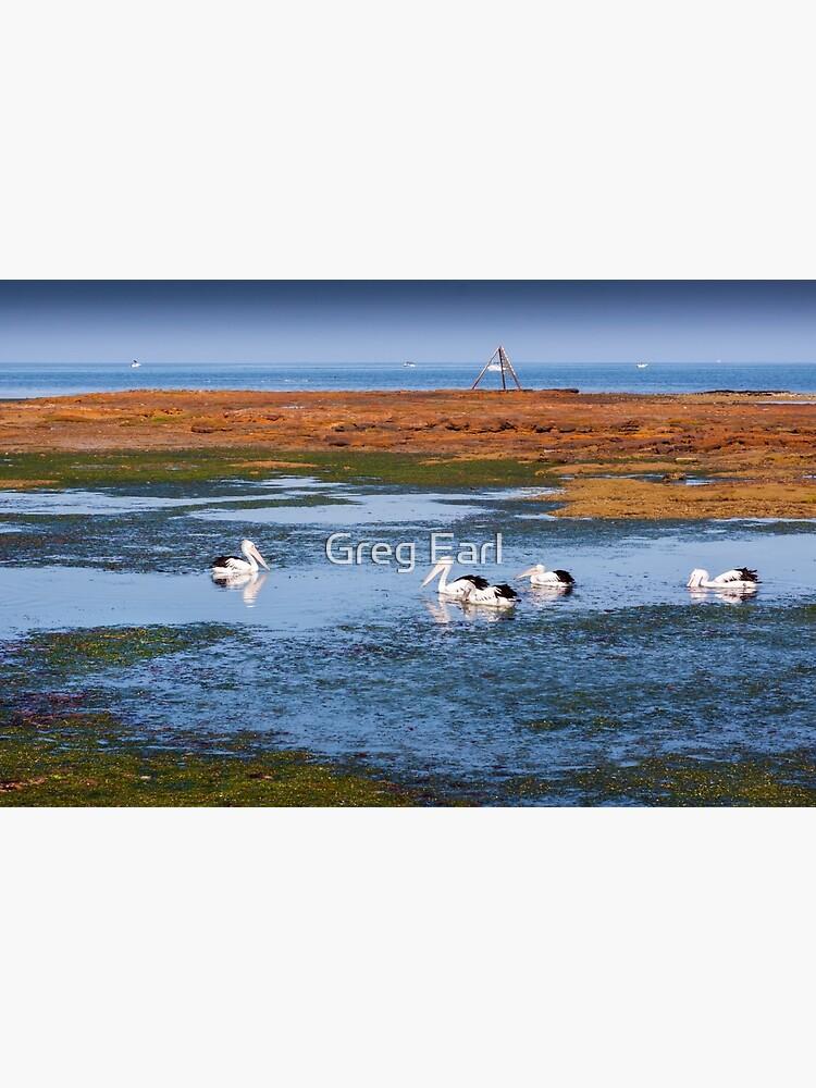 Pelicans Feeding - Rickett's Point by GregEarl