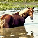"""""""Horses with Attitude, No. 2, """"What You Lookin' At?'""""... prints and products by Bob Hall©"""