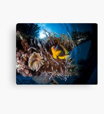 Under water photography of a Red Sea Canvas Print