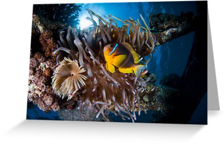 Under water photography of a Red Sea by PhotoStock-Isra