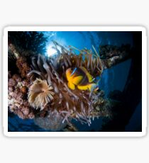 Under water photography of a Red Sea Sticker