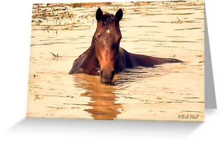 """Horses with Attitude, no.1, 'Come Out Here and Say That'""... prints and products by Bob Hall©"