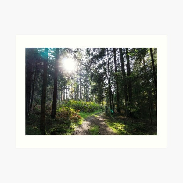 Illuminated, green forest on a sunny midday Art Print