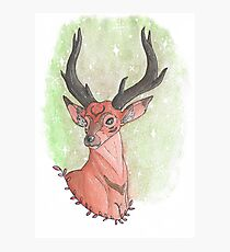 Deer Bust Photographic Print