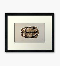 Tortoises terrapins and turtles drawn from life by James de Carle Sowerby and Edward Lear 012 Framed Print