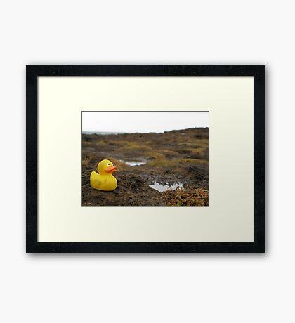 Duckscovering Rock Pools Framed Print
