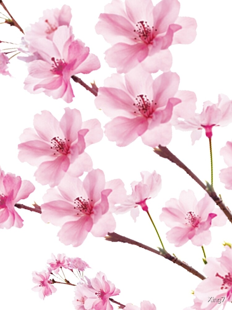Sakura Cherry Blossom de Xing7