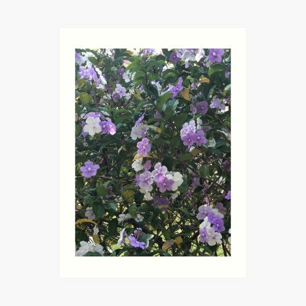 Peaceful Purple Art Print