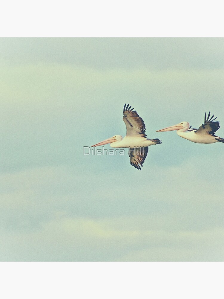 Pelicans in flight by dilshara