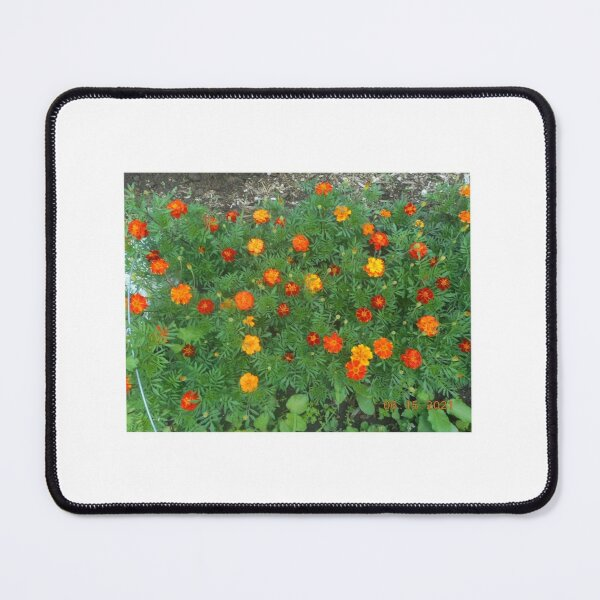 Marigold flowers Mouse Pad