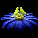 Birds Of A Feather... by Karen  Helgesen