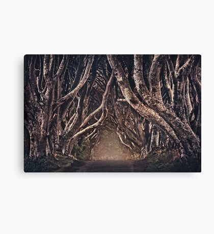 The Magical Path Canvas Print