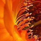 Pollen dance by Linda Sparks