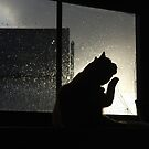 Ginger cat and rainy window by turniptowers
