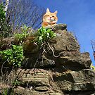 Ginger cat on stone wall by turniptowers
