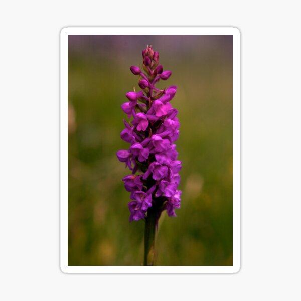 Fragrant Orchid, Dun Eochla, Inishmore Sticker