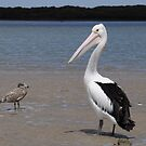 Pelican and friend by Tamara Bush