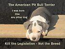 Unfair Breed Specific Legislation by Ginny York
