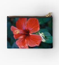 Hibiscus from Lycia (Turkey). Brown Sugar BookStory 2008. Virews : 465. Studio Pouch