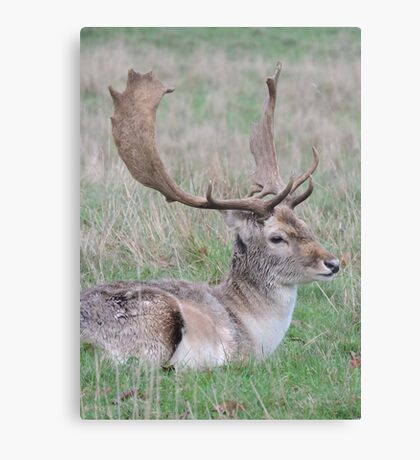 The Resting Prince Canvas Print