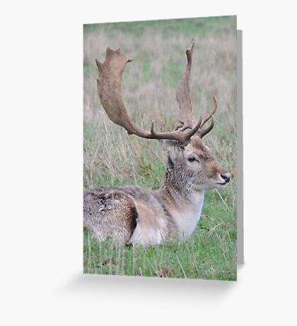 The Resting Prince Greeting Card