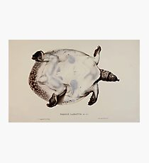 Tortoises terrapins and turtles drawn from life by James de Carle Sowerby and Edward Lear 053 Photographic Print