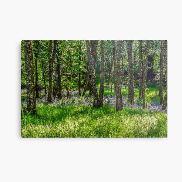 Taychreggan Forest, Argyll, Scotland Metal Print