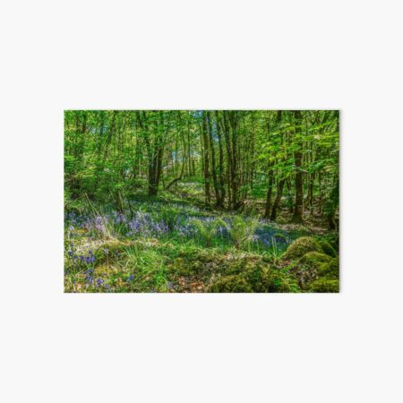 Forest in bloom with bluebells, Co. Argyll, Scotland Art Board Print