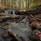 Autumn Flows along the Creel by Sue  Cullumber