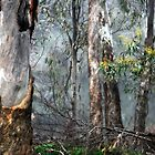 Trees and wattles in Winter by Lorraine McCarthy by Lozzar Landscape