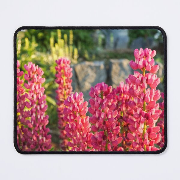 Living Coral Coloured Lupines in Glorious Morning Light Mouse Pad