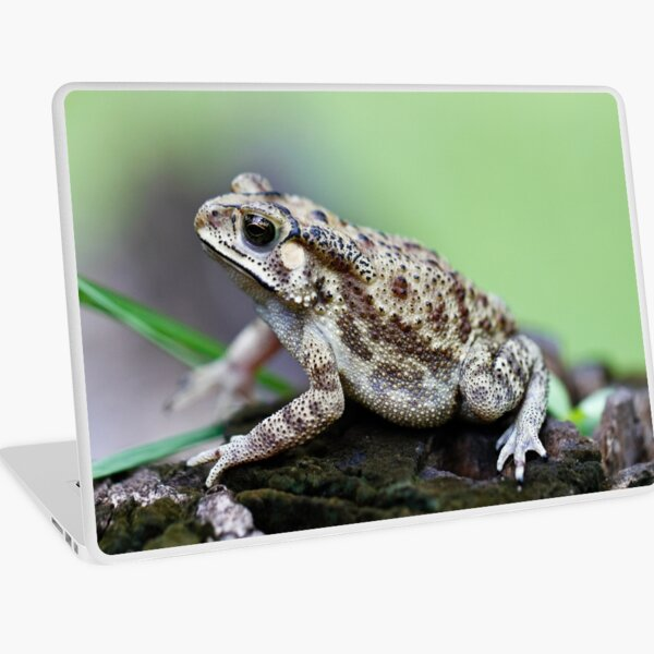 Bufo Species of Toad Laptop Skin