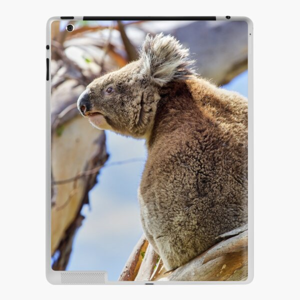 Koala iPad Skin