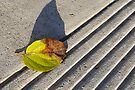 Balboa Park Leaf by Larry Costales