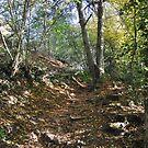 Offa's Dyke Path - Tintern, Wye Valley, 2016 by Samantha Creary