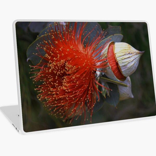 Eucalyptus macrocarpa Laptop Skin