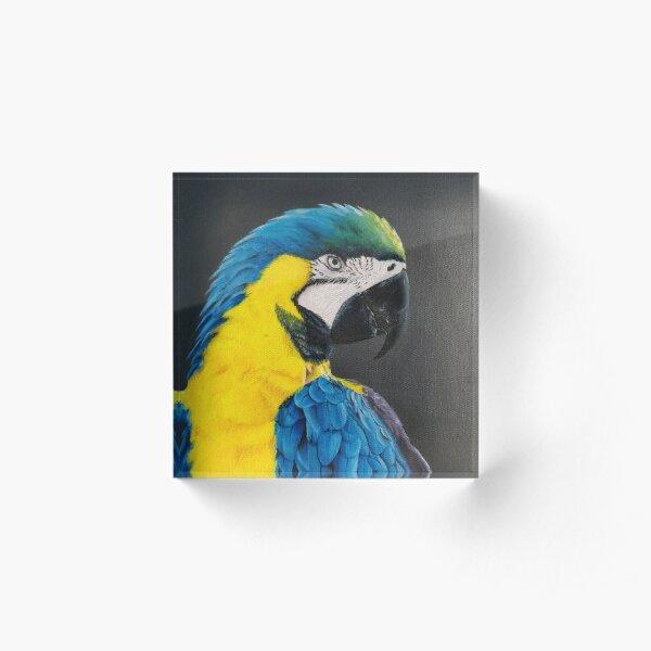 Laurel Blue Macaw Parrot Acrylic Block