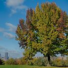 Tree in Schenley Oval by Imagery